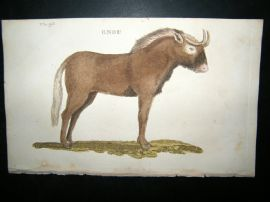 Brightly 1811 Antique Hand Col Print. Gnou